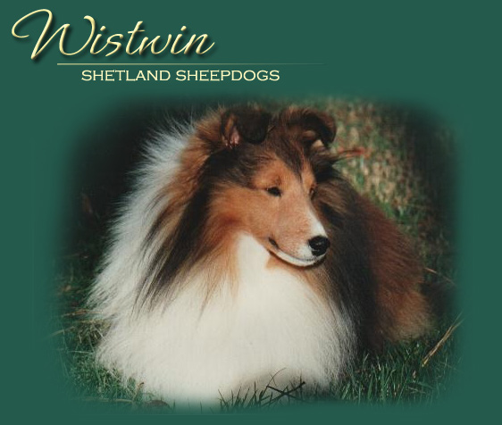 Wistwin Shetland Sheepdogs Website, North Carolina; pictured is Am/Can Ch. Wistwin Andante